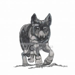 On the Prowl by Bill Roy ink on paper  8.5″x 11″