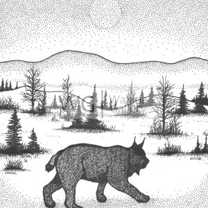 Lynx on the Prowl by Christopher Chambaud felt-tip on paperboard  8.5″x 11″
