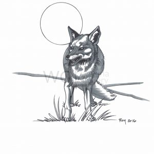 Wolf by Bill Roy ink on paper  8.5″x 11″ Wolf
