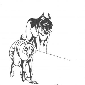 Wolves by Bill Roy ink on paper  8.5″x 11″
