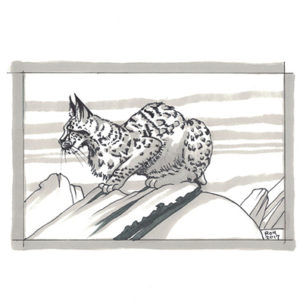 Lynx Pose by Bill Roy original illustration ink on paper  8.5″x 11″