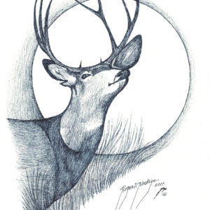 Caribou by Roger Noskiye ink  8.5″x 11″