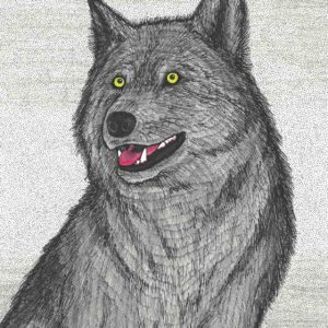 Timberwolf by Christopher Chambaud ink on paper  8.5″x 11″