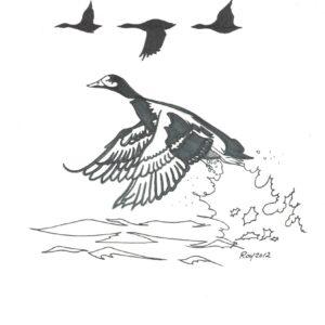 """Ducks"" by Bill Roy original illustration ink on paper  8.5″x 11″"
