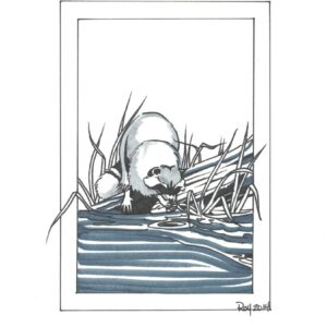 """""""Racoon"""" by Bill Roy original illustration ink on paper  8.5″x 11″"""