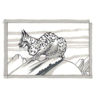 Lynx Pose by Bill Roy original illustration ink on paper  8.5″x 11″