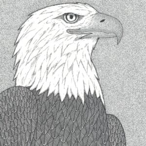 """""""Eagle"""" print illustration by Christopher Chambaud felt-tip on paperboard  8.5″x 11″"""
