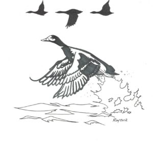 """Ducks"" by Bill Roy original illustration ink on paper  8.5″x 11″"