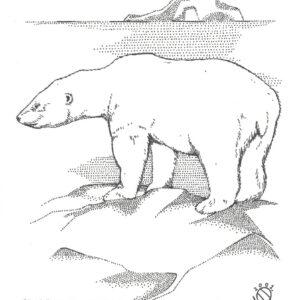 """Polar Bear Cold North"" original illustration by Christopher Chambaud felt-tip on paperboard  8.5″x 11″"